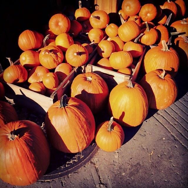 Citrouilles urbaines / Urban pumpkins