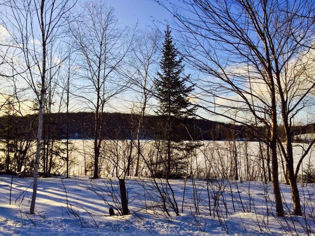 Sapin en hiver / Pine in winter